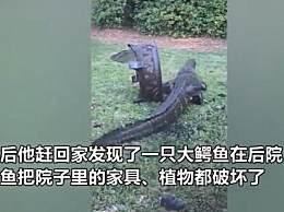 美国居民家闯入一只鳄鱼