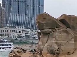 重庆千年神龟奇石露出江面 专家揭千年神龟身世的秘密