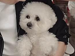 李佳琦宠物名字申请注册商标 李佳琦宠物狗奈娃你喜欢吗