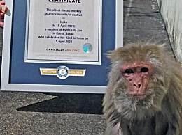 42岁猕猴获世界纪录 世界上最高龄的人工饲育猕猴