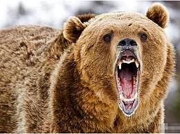 一女牧民被棕熊从帐篷内叼走咬死 尸体遭大面积啃咬