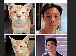 杨丞琳认证李荣浩撞脸猫咪