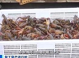 小龙虾收购价几近腰斩 今年小龙虾的价格大跳水