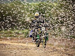 巴基斯坦面临新一轮蝗灾考验 巴基斯坦再次受到沙漠蝗虫侵扰