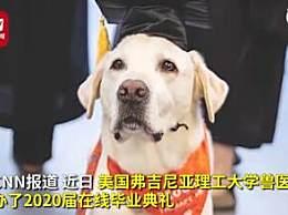 8岁治疗犬获博士学位