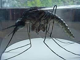 世界上最大的蚊子,長的竟然和小孩一樣大,膽小勿看!!