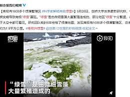 气候变暖致南极出现绿色的雪