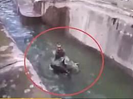 波兰男子解封后去动物园跟母熊打架