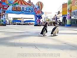 武汉欢乐谷有两只企鹅游客