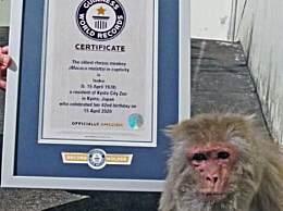 世界上最长寿的猴子 42岁猕猴打破吉尼斯世界纪录