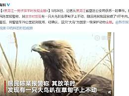 黑龙江一男子放羊时发现金雕