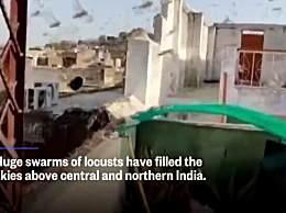 印度面临26年来最严重蝗虫灾害 农民甚至用敲打钢铁器皿的方式来驱