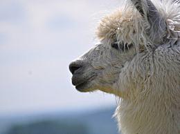 哪种动物的瞳孔是长方形的
