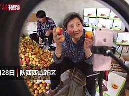 80岁奶奶直播带货卖杏40箱