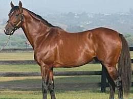 世界上最贵的马 竟拍出1.1亿高价