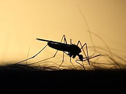 为什么蚊子喜欢在耳边叫?蚊子喜欢在耳边嗡嗡叫也是有原因的