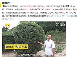 67岁老农用17年种出椅子树
