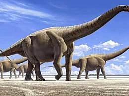 地球有史以来最大动物 身长80米体重220吨