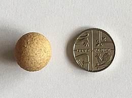 世界上最小鸡蛋 高1.55厘米比硬币还小