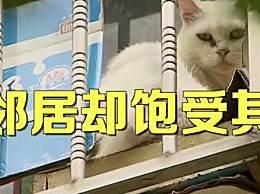 夫妻搬家把房让给66只猫
