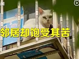 夫妻搬家把房让给66只猫 邻居苦不堪言