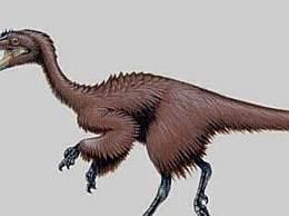 世界上最小的恐龙身材 仅有火鸡大小