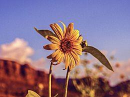 描写夏至的诗句有哪些?夏至诗词汇总赏析