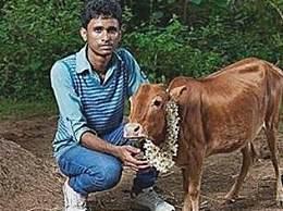 世界上最小的牛 身高仅69厘米