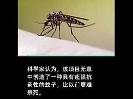 美释放转基因蚊子 通过交配杀死或减少蚊子数量