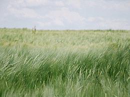 夏至农事谚语有哪些?夏至节气谚语大全