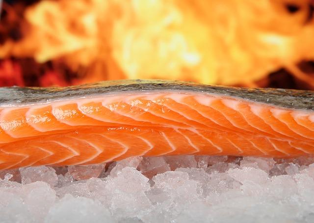 挪威三文鱼养殖罪恶 得病三文鱼身上布满溃疡环境肮脏