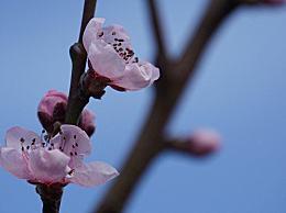 端午节有喝桃花酒的习俗 端午节桃花酒传说故事