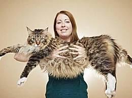 世界上最大的猫 比普通猫大三倍