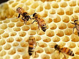 蜂蜜起泡沫是怎么办
