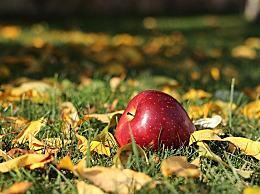 为什么说晚上吃苹果等于吃砒霜