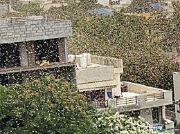 漫天蝗虫逼近新德里