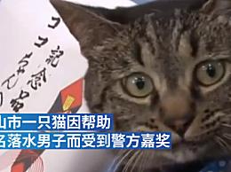 家猫协助救下落水男子获警方嘉奖