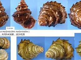 专家回应螺蛳拟列为二级保护动物
