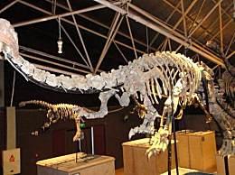 研究称小行星撞击地球是恐龙灭绝主因 唯一存活下来的恐龙后来进化