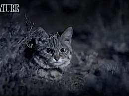 世界上最小的猫咪