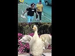 警方回应王珞丹寻鸭启事