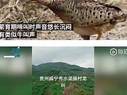 贵州山中龙吟为鸟类发出声源