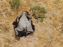 震惊!数百头大象突然神秘死亡 专家都惊呆了