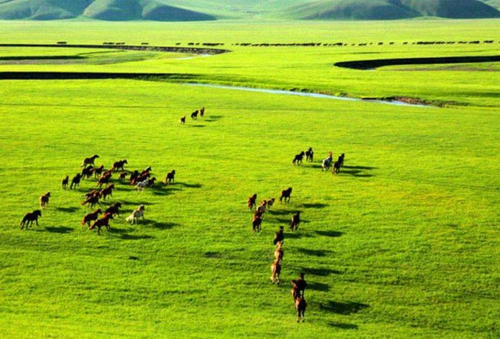 全球四大草原盘点为你介绍世界上最好的草原