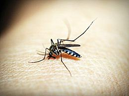 蚊虫叮咬安全有效的止痒方法