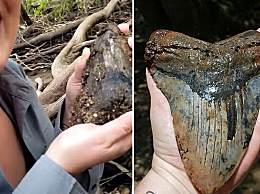 美夫妻发现史前巨鲨牙齿