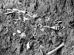 山西高平发现疑似长平之战尸骨坑