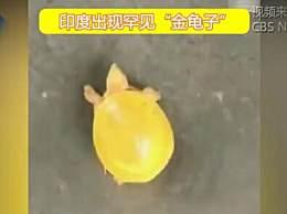 印度渔民发现金色乌龟
