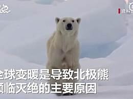 全球变暖或致北极熊在本世纪末灭绝
