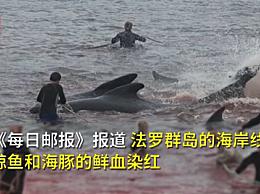 丹麦法罗群岛数百鲸鱼和海豚被捕杀 这是岛上渔民延续了1000年的传